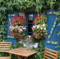Habillez votre façade grâce aux plantes grimpantes