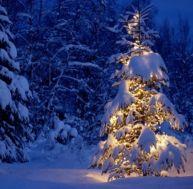 Planter un sapin de Noël