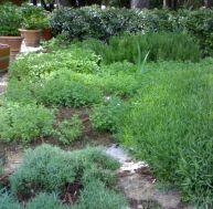 Plantes aromatiques et condimentaires