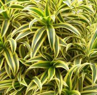 10 plantes dépolluantes