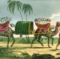 Gravure du 19ème siècle représentant des dromadaires devant les pyramides