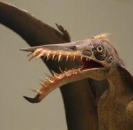 Reconstitution d'un ptérodactyle