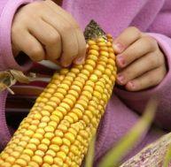 Les repères pour reconnaître les produits contenant des OGM
