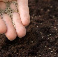 Réussir ses semis et boutures