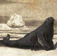 Rencontre étonnante avec une rhytine, gravure du 18ème siècle