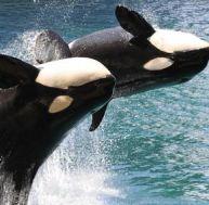 L'orque et les hommes