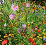 Les fleurs annuelles