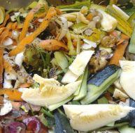 Les composants du compost