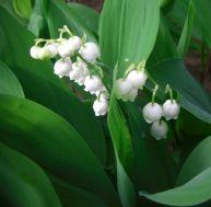 Travauxdu jardin au mois de mai