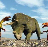 Rencontre un tricératops et deux tyrannosaures