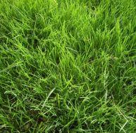 Connaître les différents types de pelouse
