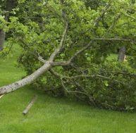 Désordres et accidents dans le jardin