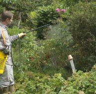 Un homme en train de traiter ses plantes - © C. Hochet