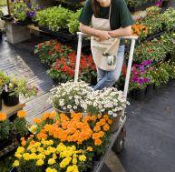 Une pépiniériste avec un chariot de fleurs