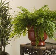 Une plante d'intérieur - © C. Hochet