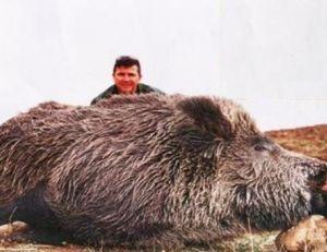 """Un """"Attila"""" de plusieurs quintaux tué dans la région de Kalkim en Turquie © courtoisie nature tours www.naturetours.fr"""