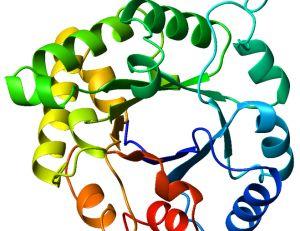 Maladie auto-immune et protéine C réactive © Akane700 / Wikimédia Commons.