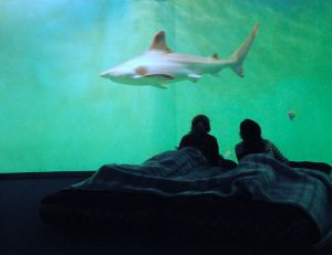 L'aquarium de Saint-Malo