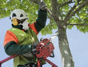 Professionnel abattant un arbre © CG94 photos / Flickr
