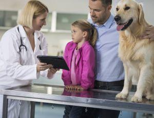 Choisir une assurance pour son chien