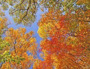 Et si l'automne avait déjà commencé ?