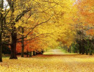 L'automne est là...