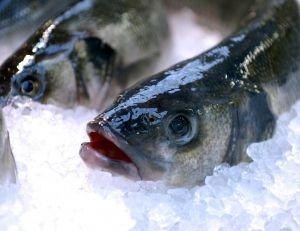 Les principaux poissons de mer