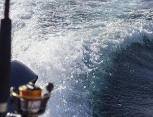 Des chercheurs affirment que le bruit des bateaux augmentent la mortalité des poissons