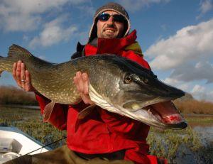 Pêche du brochet au poisson nageur