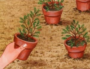 Planter la bruyère