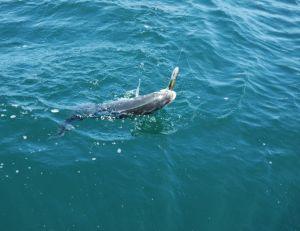 Bien équipé, le pêcheur peut sortir de beaux spécimens