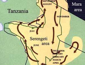 Carte des migrations des gnous bleus entre la Tanzanie et le Kenya