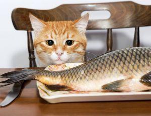 Des scientifiques chinois voient le poisson comme un bon remède contre la dépression