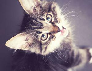 Des chercheurs estiment que le rationnement des chats favorise leur affection tout en leur permettant de garder la ligne