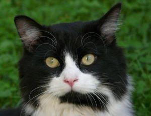 Votre chat est-il un pervers ? -© Deviantart
