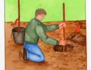 Préparer le sol pour planter un cerisier