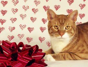 Et si la star de la Saint Valentin n'était autre que votre chat ?