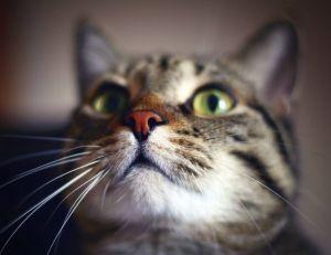 Des chercheurs supposent que le pelage des chats pourraient laisser suggérer un caractère particulier