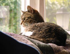 La vie avec un chat en appartement