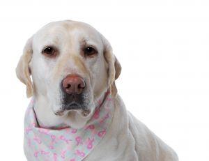 L'odorat du chien pour dépister le cancer