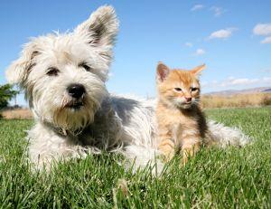 Chiens et chats peuvent être victimes de morsure de vipère