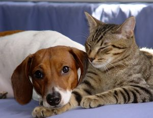 Faire cohabiter un chien et un chat