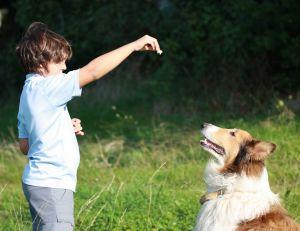 10 trucs essentiels pour dresser un chien