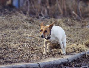 La ville de Tarragone envisage d'effectuer prochainement des tests ADN sur les crottes de chiens pour traquer les propriétaires indisciplinés