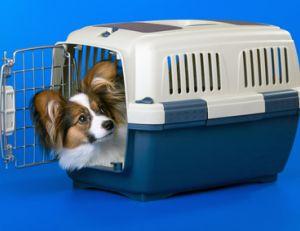 Votre chien doit se sentir à l'aise dans sa cage