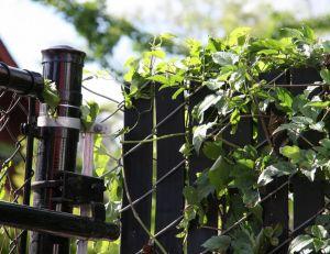 Choisir des plantes grimpantes pour son grillage de jardin