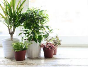 Choisir des plantes pour chaque pièce de la maison.