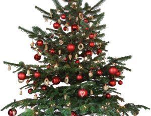 Choisir un sapin de Noël (plantes & jardins)