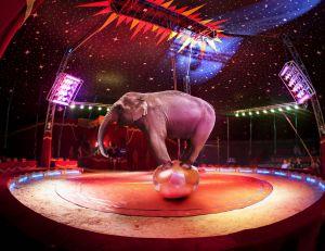 Cirque : d'où viennent-ils ?