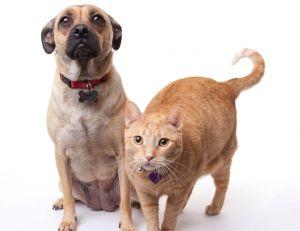 Quid d'un collier permettant de connaître l'état d'esprit de nos animaux de compagnie ?